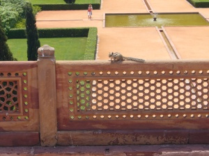 a squirrel at Humayun's Tomb