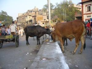 India2007 053