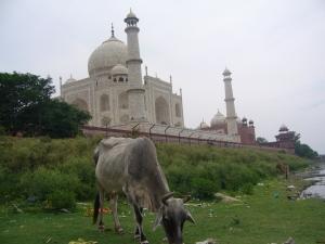 India2007 139