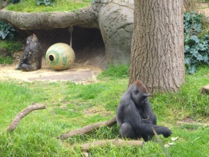 These Gorilla's must have had an argument!