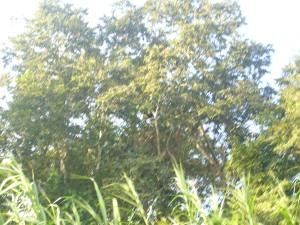 Borneo June '08 050