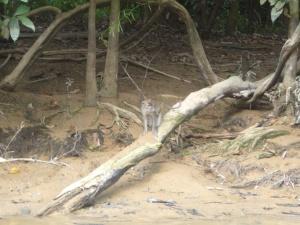 Borneo June '08 095