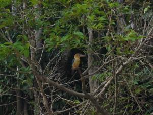 Borneo June '08 101