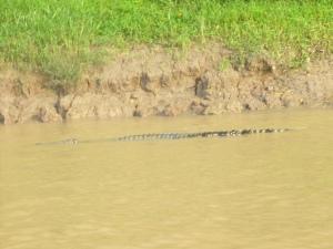 Borneo June '08 111