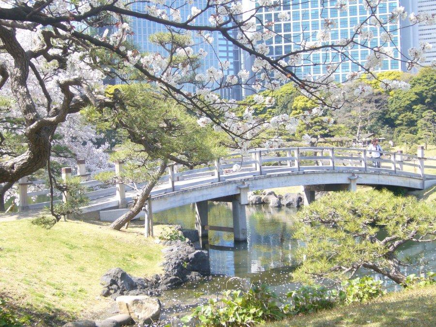 Hamarikyu Gardens Apr 2011 042 | Tokyo Fox (東京狐)